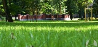 Więcej zieleni w sławskim parku