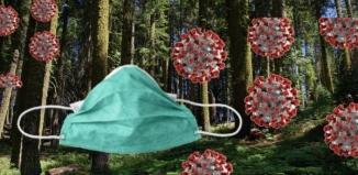 Zakaz wstępu do lasu