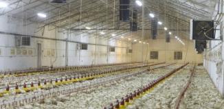 Będzie ferma drobiu w Lipnie? Mieszkańcy protestują, wójt wprowadzony w błąd