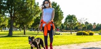 Mandat za spacer z psem bez smyczy?