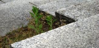 Zalety i wady schodów granitowych