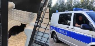 Dębowa Łęka: Policjanci uratowali małego kotka