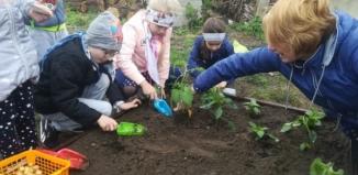 Przedszkolaki zadbają o swój własny ogródek