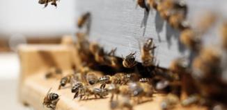 Choroba pszczółw Gminie Wschowa!