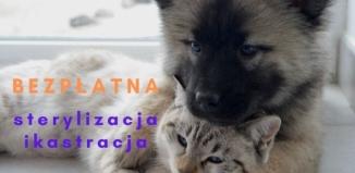 Bezpłatna sterylizacja i kastracja psów i kotów