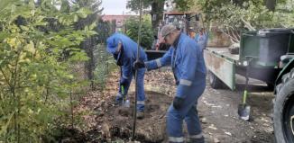Sadzą nowe drzewa we Wschowie (ZDJĘCIA)